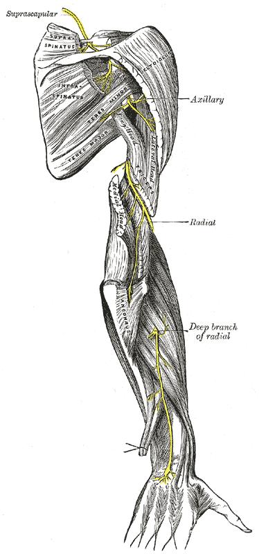UplynuláStream: Nervová zranění – úvod a horní půlka těla